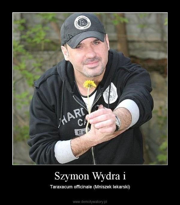 Szymon Wydra i – Taraxacum officinale (Mniszek lekarski)