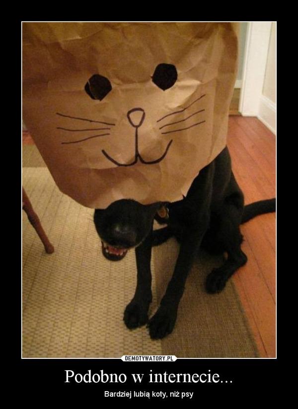 Podobno w internecie... – Bardziej lubią koty, niż psy