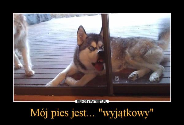 """Mój pies jest... """"wyjątkowy"""" –"""