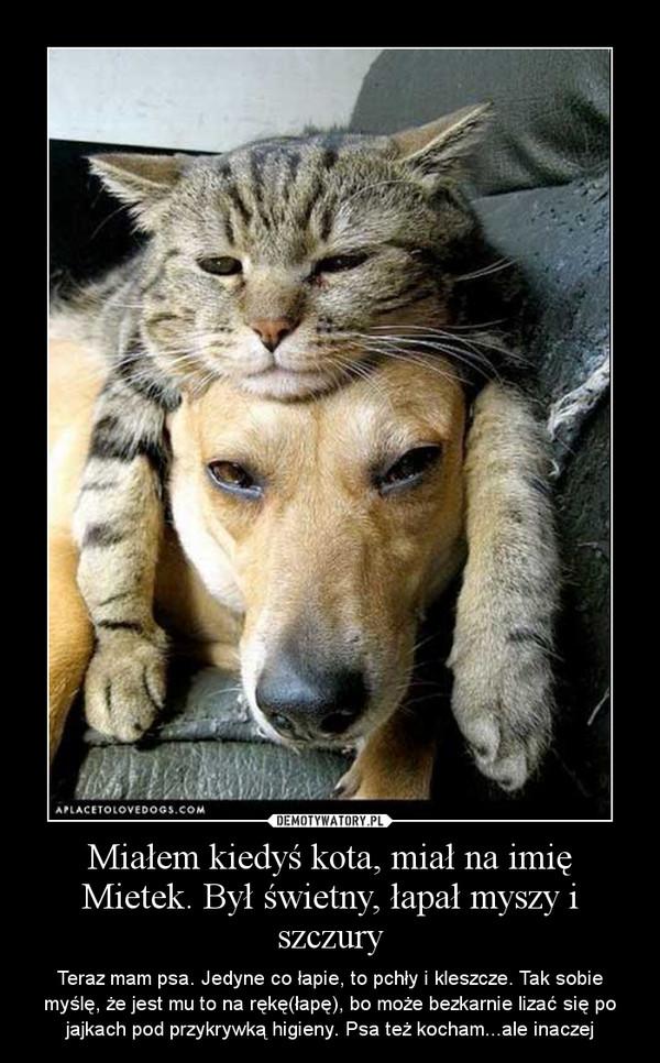 Miałem kiedyś kota, miał na imię Mietek. Był świetny, łapał myszy i szczury – Teraz mam psa. Jedyne co łapie, to pchły i kleszcze. Tak sobie myślę, że jest mu to na rękę(łapę), bo może bezkarnie lizać się po jajkach pod przykrywką higieny. Psa też kocham...ale inaczej