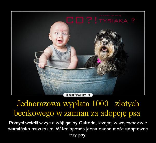 Jednorazowa wypłata 1000   złotych becikowego w zamian za adopcję psa  – Pomysł wcielił w życie wójt gminy Ostróda, leżącej w województwie warmińsko-mazurskim. W ten sposób jedna osoba może adoptować trzy psy.