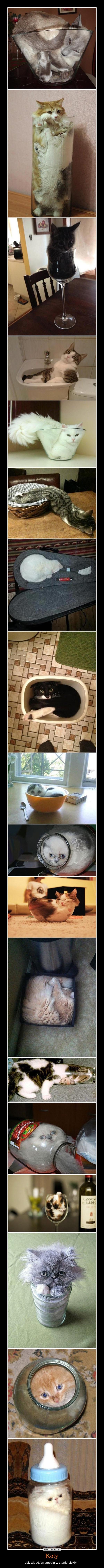 Koty – Jak widać, występują w stanie ciekłym