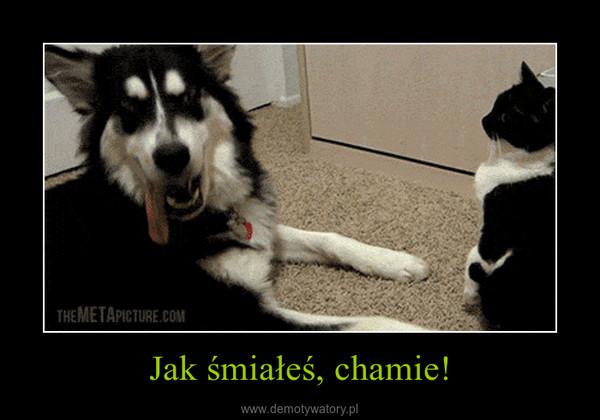 Jak śmiałeś, chamie! –