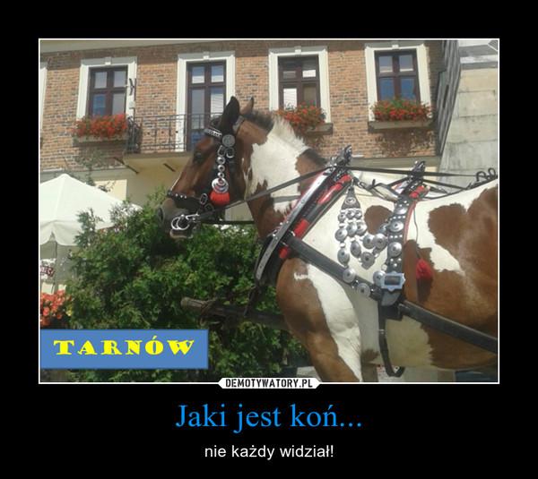 Jaki jest koń... – nie każdy widział!