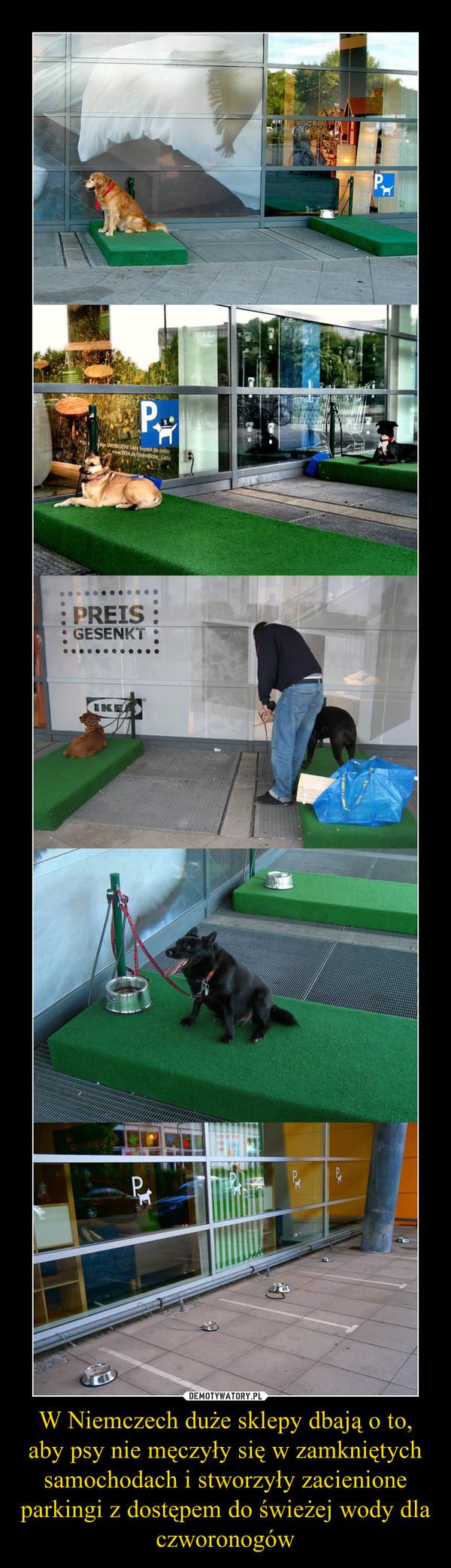 W Niemczech duże sklepy dbają o to, aby psy nie męczyły się w zamkniętych samochodach i stworzyły zacienione parkingi z dostępem do świeżej wody dla czworonogów –