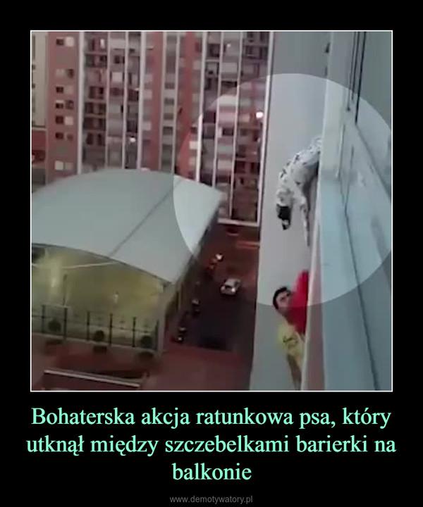 Bohaterska akcja ratunkowa psa, który utknął między szczebelkami barierki na balkonie –