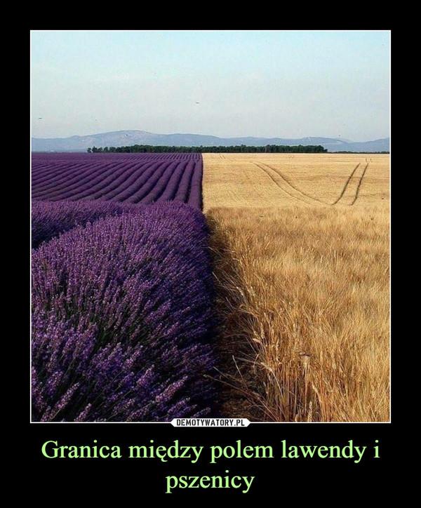 Granica między polem lawendy i pszenicy –