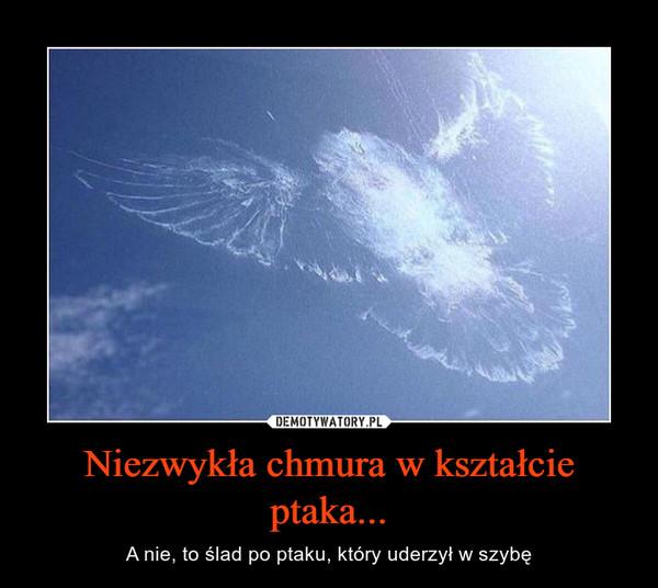 Niezwykła chmura w kształcie ptaka... – A nie, to ślad po ptaku, który uderzył w szybę