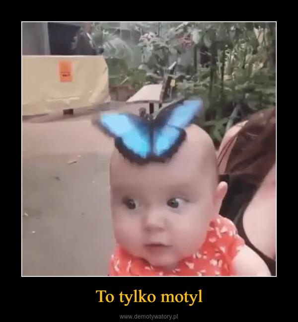 To tylko motyl –