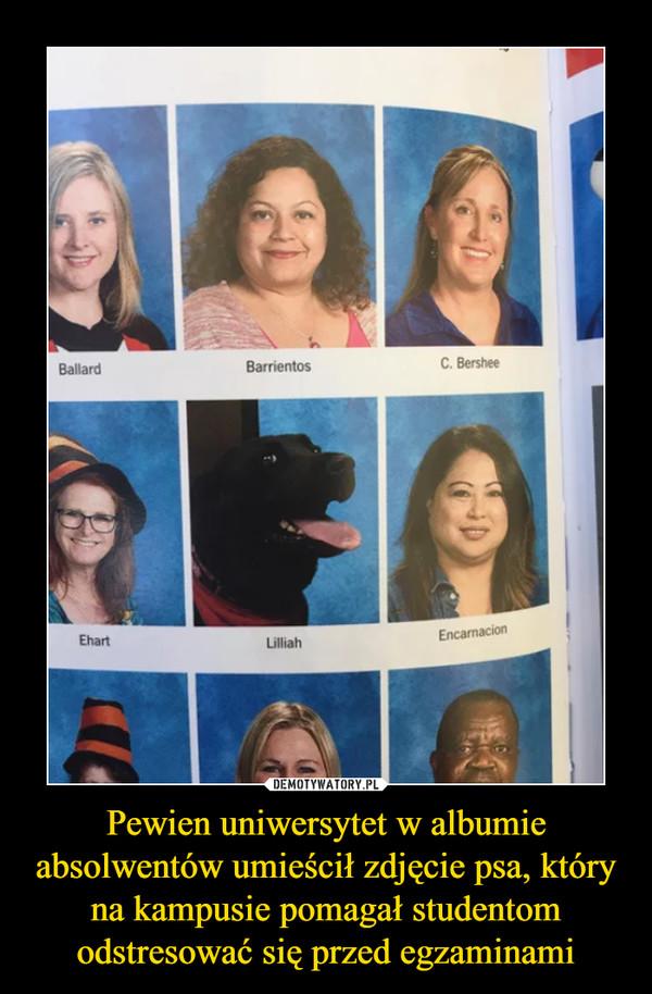 Pewien uniwersytet w albumie absolwentów umieścił zdjęcie psa, który na kampusie pomagał studentom odstresować się przed egzaminami –