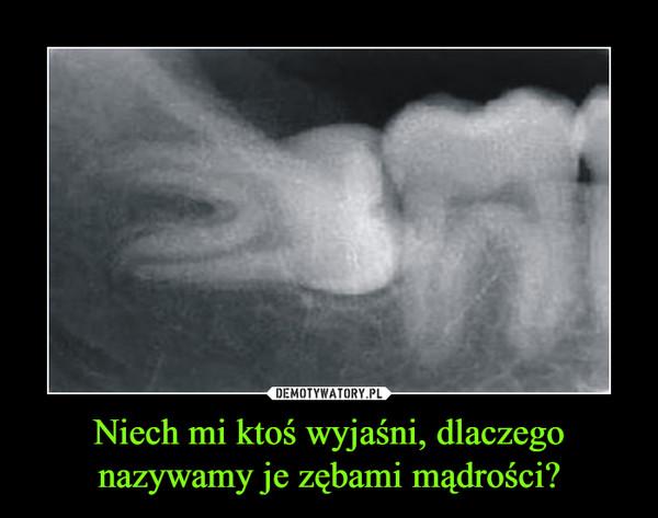 Niech mi ktoś wyjaśni, dlaczego nazywamy je zębami mądrości? –