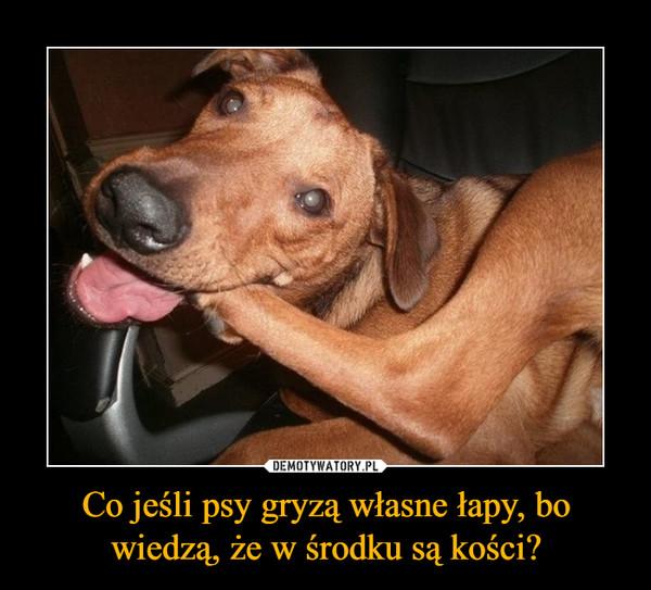 Co jeśli psy gryzą własne łapy, bo wiedzą, że w środku są kości? –