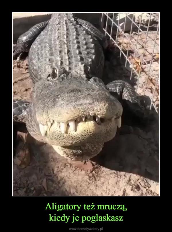 Aligatory też mruczą,kiedy je pogłaskasz –