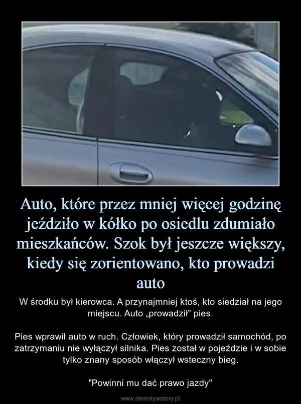 """Auto, które przez mniej więcej godzinę jeździło w kółko po osiedlu zdumiało mieszkańców. Szok był jeszcze większy, kiedy się zorientowano, kto prowadzi auto – W środku był kierowca. A przynajmniej ktoś, kto siedział na jego miejscu. Auto """"prowadził"""" pies.Pies wprawił auto w ruch. Człowiek, który prowadził samochód, po zatrzymaniu nie wyłączył silnika. Pies został w pojeździe i w sobie tylko znany sposób włączył wsteczny bieg.""""Powinni mu dać prawo jazdy"""""""