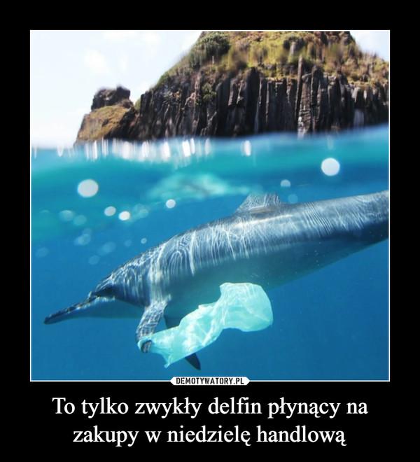 To tylko zwykły delfin płynący na zakupy w niedzielę handlową –