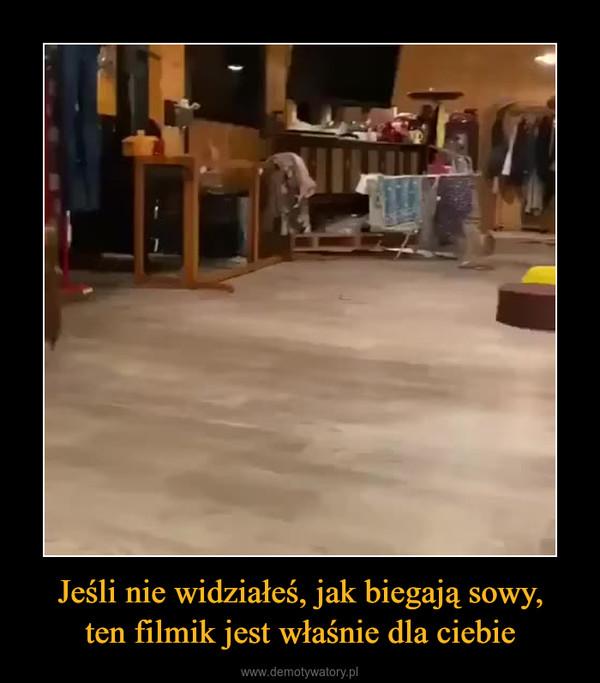 Jeśli nie widziałeś, jak biegają sowy,ten filmik jest właśnie dla ciebie –