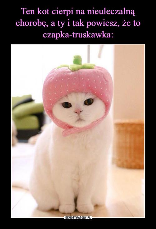 Ten kot cierpi na nieuleczalną chorobę, a ty i tak powiesz, że to czapka-truskawka:
