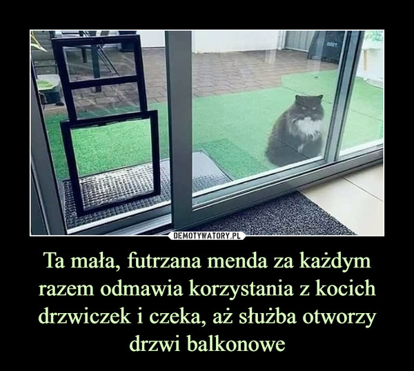 Ta mała, futrzana menda za każdym razem odmawia korzystania z kocich drzwiczek i czeka, aż służba otworzy drzwi balkonowe –