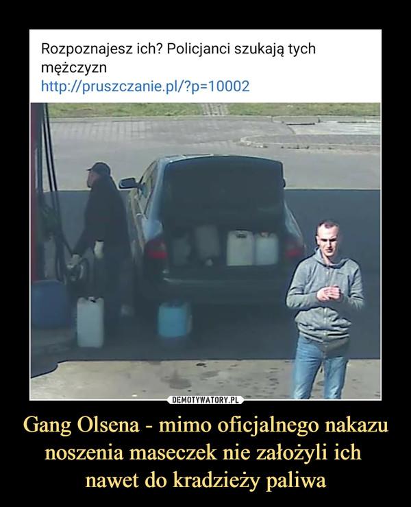 Gang Olsena - mimo oficjalnego nakazu noszenia maseczek nie założyli ich nawet do kradzieży paliwa –