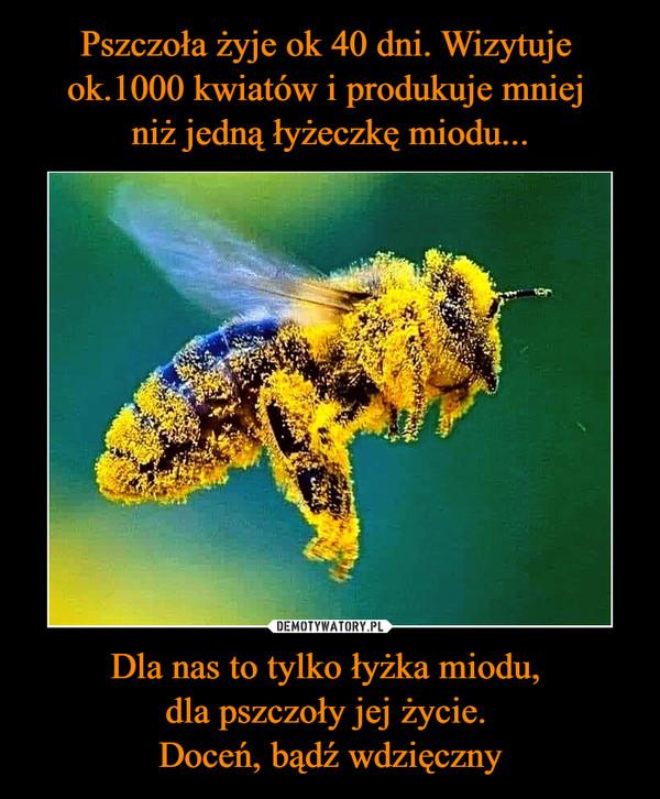 Dla nas to tylko łyżka miodu, dla pszczoły jej życie. Doceń, bądź wdzięczny –
