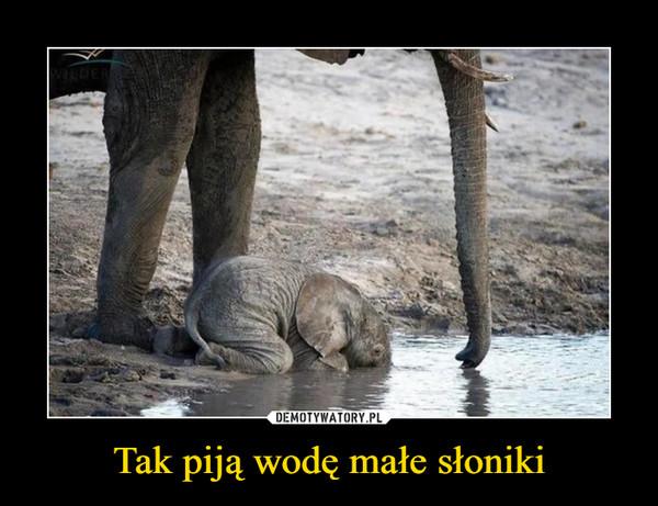 Tak piją wodę małe słoniki –