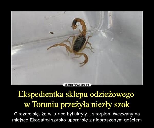 Ekspedientka sklepu odzieżowego w Toruniu przeżyła niezły szok – Okazało się, że w kurtce był ukryty... skorpion. Wezwany na miejsce Ekopatrol szybko uporał się z nieproszonym gościem