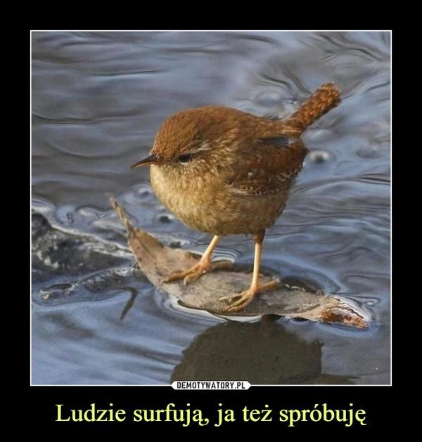 Ludzie surfują, ja też spróbuję –