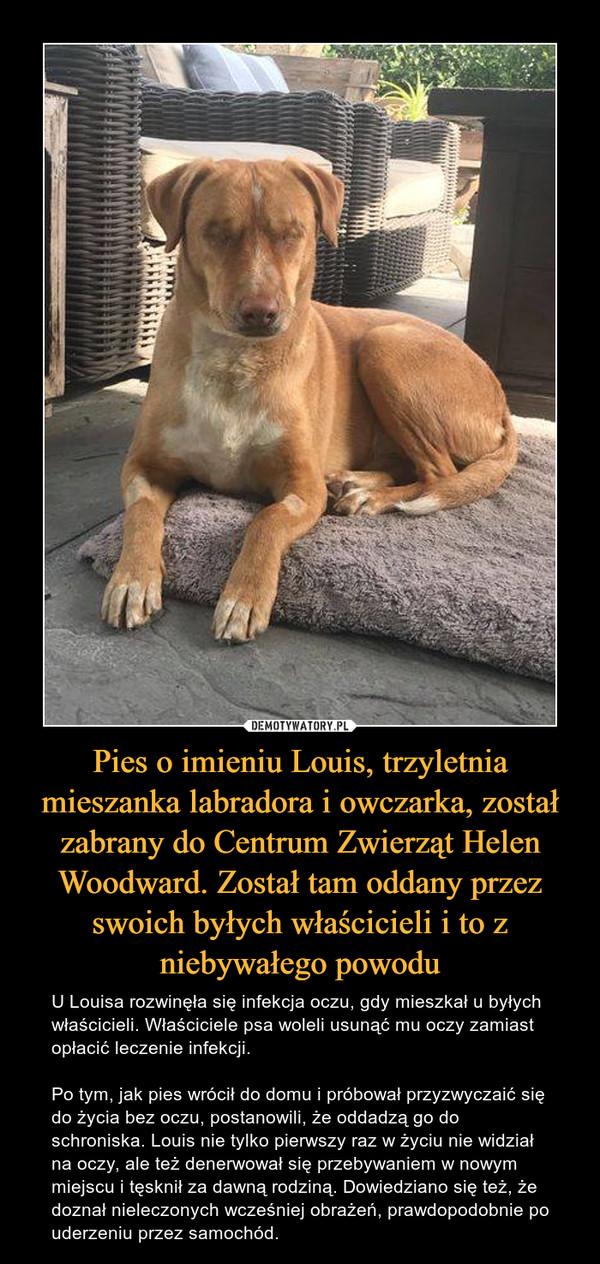 Pies o imieniu Louis, trzyletnia mieszanka labradora i owczarka, został zabrany do Centrum Zwierząt Helen Woodward. Został tam oddany przez swoich byłych właścicieli i to z niebywałego powodu – U Louisa rozwinęła się infekcja oczu, gdy mieszkał u byłych właścicieli. Właściciele psa woleli usunąć mu oczy zamiast opłacić leczenie infekcji.Po tym, jak pies wrócił do domu i próbował przyzwyczaić się do życia bez oczu, postanowili, że oddadzą go do schroniska. Louis nie tylko pierwszy raz w życiu nie widział na oczy, ale też denerwował się przebywaniem w nowym miejscu i tęsknił za dawną rodziną. Dowiedziano się też, że doznał nieleczonych wcześniej obrażeń, prawdopodobnie po uderzeniu przez samochód.