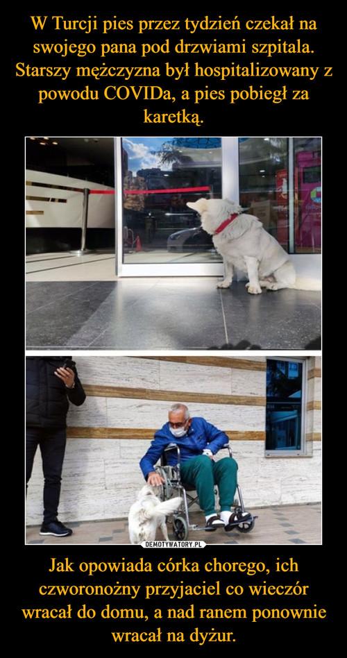 W Turcji pies przez tydzień czekał na swojego pana pod drzwiami szpitala. Starszy mężczyzna był hospitalizowany z powodu COVIDa, a pies pobiegł za karetką. Jak opowiada córka chorego, ich czworonożny przyjaciel co wieczór wracał do domu, a nad ranem ponownie wracał na dyżur.