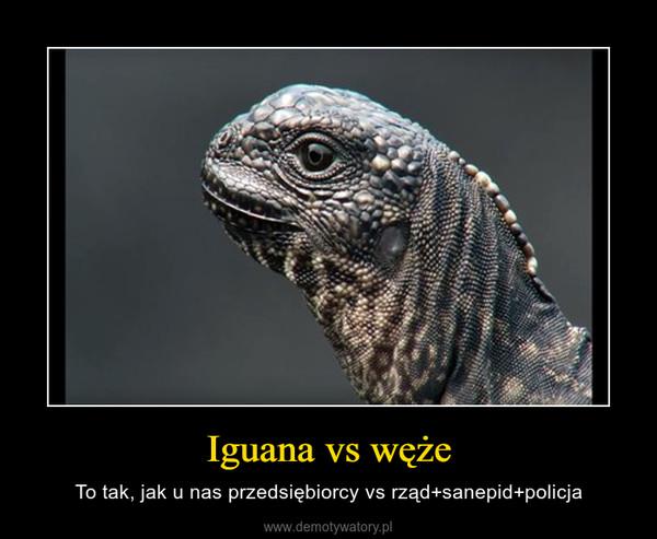 Iguana vs węże – To tak, jak u nas przedsiębiorcy vs rząd+sanepid+policja