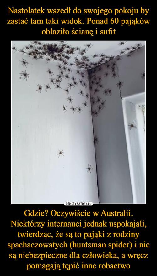 Nastolatek wszedł do swojego pokoju by zastać tam taki widok. Ponad 60 pająków obłaziło ścianę i sufit Gdzie? Oczywiście w Australii. Niektórzy internauci jednak uspokajali, twierdząc, że są to pająki z rodziny spachaczowatych (huntsman spider) i nie są niebezpieczne dla człowieka, a wręcz pomagają tępić inne robactwo