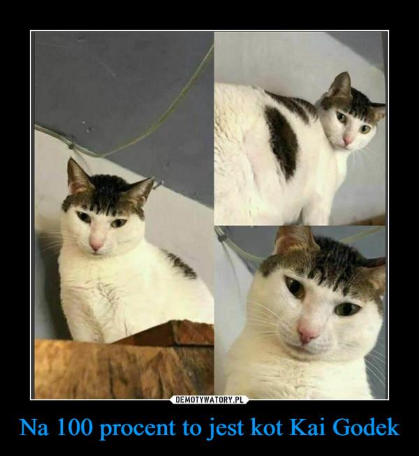 Na 100 procent to jest kot Kai Godek –