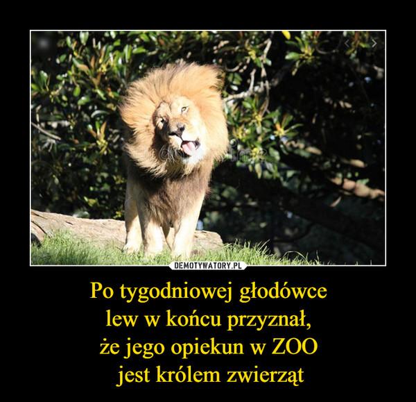 Po tygodniowej głodówce lew w końcu przyznał, że jego opiekun w ZOO jest królem zwierząt –