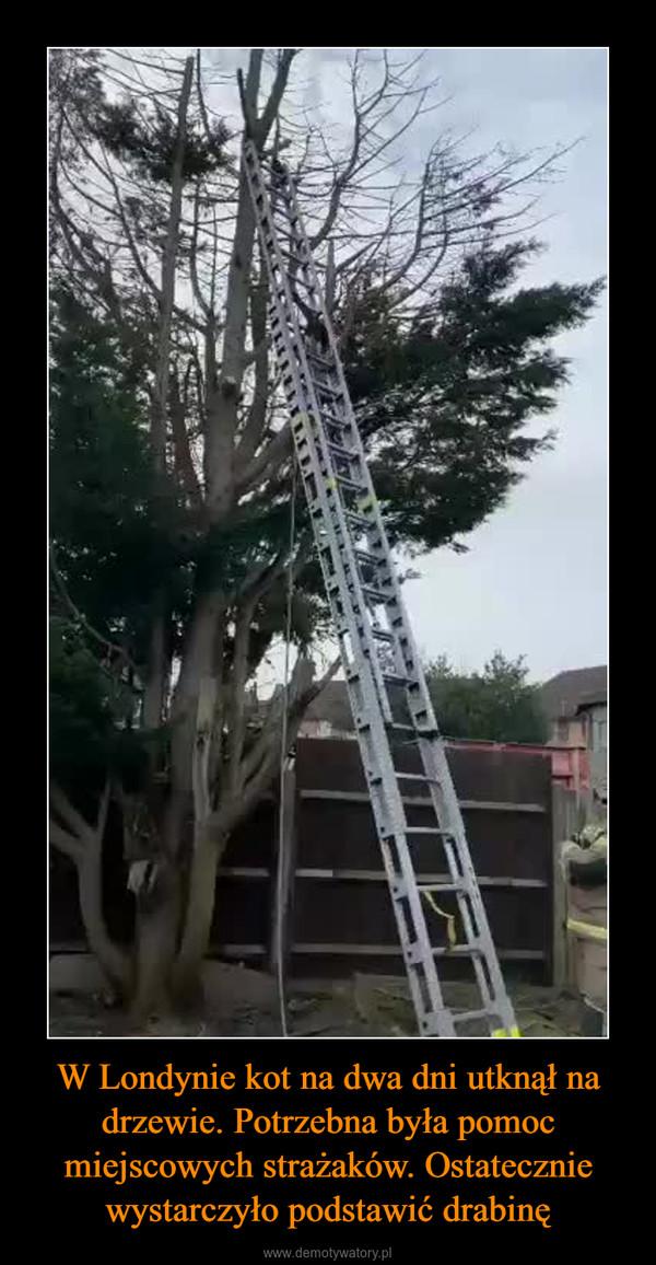 W Londynie kot na dwa dni utknął na drzewie. Potrzebna była pomoc miejscowych strażaków. Ostatecznie wystarczyło podstawić drabinę –