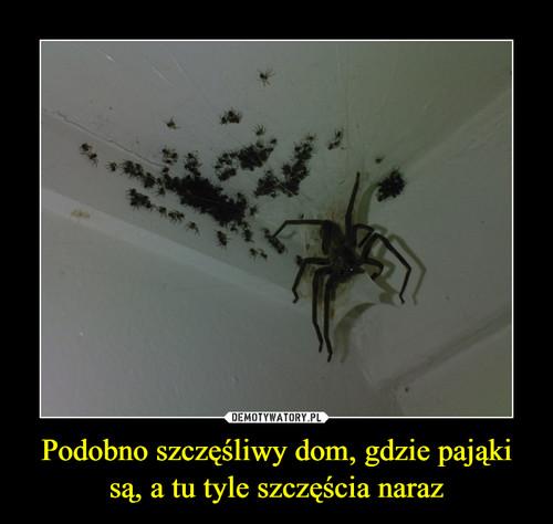 Podobno szczęśliwy dom, gdzie pająki są, a tu tyle szczęścia naraz