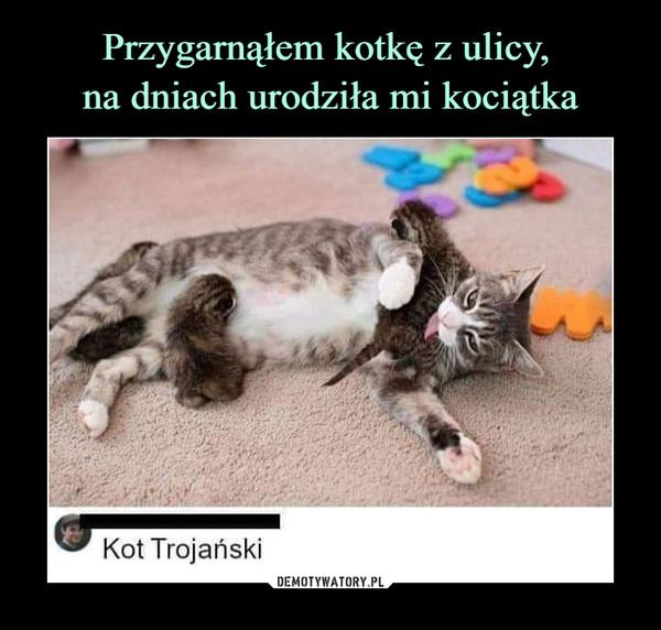 –  Kot trojański