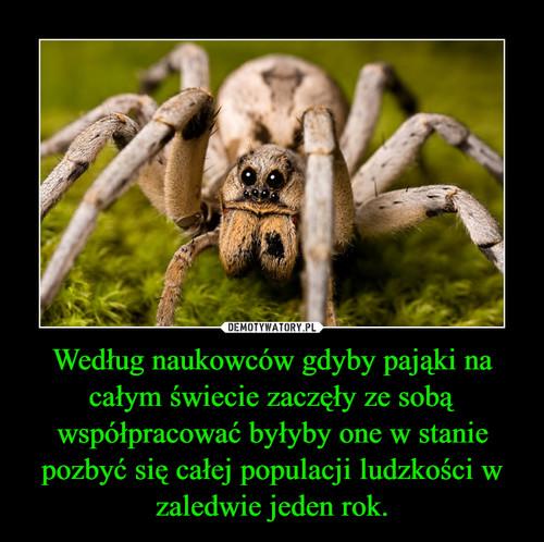 Według naukowców gdyby pająki na całym świecie zaczęły ze sobą współpracować byłyby one w stanie pozbyć się całej populacji ludzkości w zaledwie jeden rok.