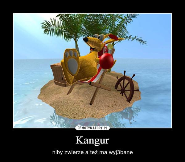 Kangur – niby zwierze a też ma wyj3bane