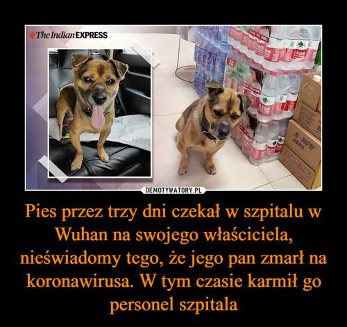 Pies przez trzy dni czekał w szpitalu w Wuhan na swojego właściciela, nieświadomy tego, że jego pan zmarł na koronawirusa. W tym czasie karmił go personel szpitala