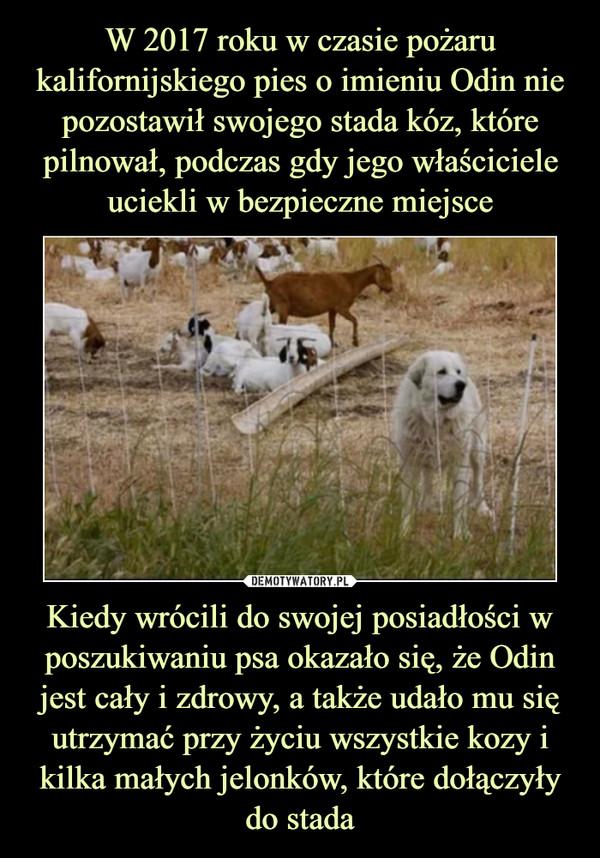 Kiedy wrócili do swojej posiadłości w poszukiwaniu psa okazało się, że Odin jest cały i zdrowy, a także udało mu się utrzymać przy życiu wszystkie kozy i kilka małych jelonków, które dołączyły do stada –