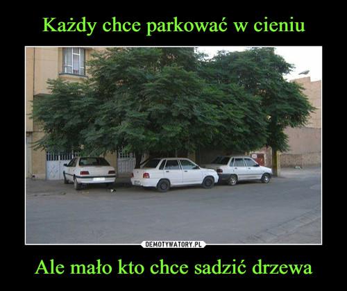 Każdy chce parkować w cieniu Ale mało kto chce sadzić drzewa