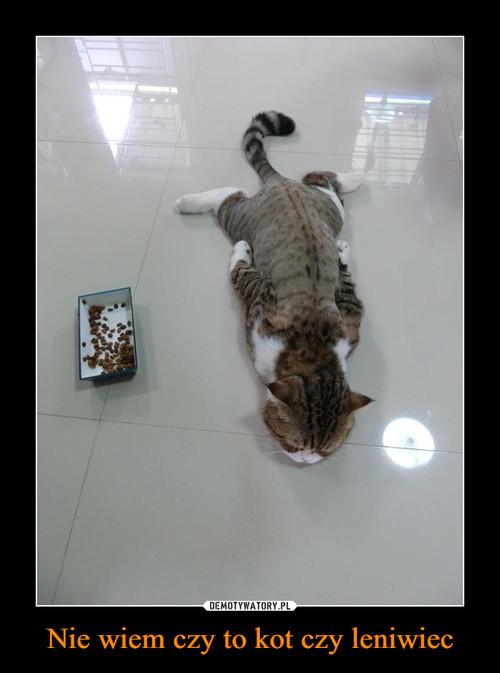 Nie wiem czy to kot czy leniwiec