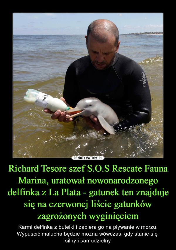 Richard Tesore szef S.O.S Rescate Fauna Marina, uratował nowonarodzonego delfinka z La Plata - gatunek ten znajduje się na czerwonej liście gatunków zagrożonych wyginięciem – Karmi delfinka z butelki i zabiera go na pływanie w morzu. Wypuścić malucha będzie można wówczas, gdy stanie się silny i samodzielny