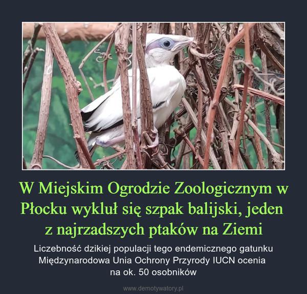 W Miejskim Ogrodzie Zoologicznym w Płocku wykluł się szpak balijski, jeden z najrzadszych ptaków na Ziemi – Liczebność dzikiej populacji tego endemicznego gatunku Międzynarodowa Unia Ochrony Przyrody IUCN ocenia na ok. 50 osobników