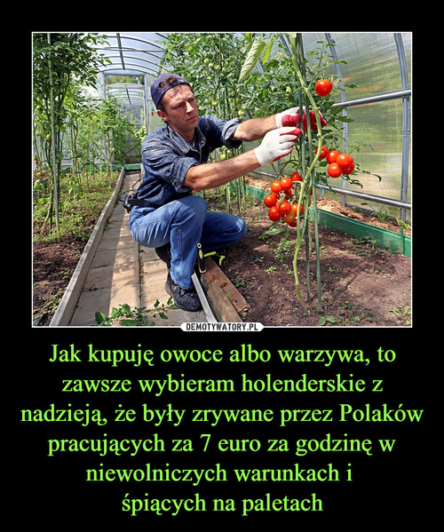 Jak kupuję owoce albo warzywa, to zawsze wybieram holenderskie z nadzieją, że były zrywane przez Polaków pracujących za 7 euro za godzinę w niewolniczych warunkach i  śpiących na paletach