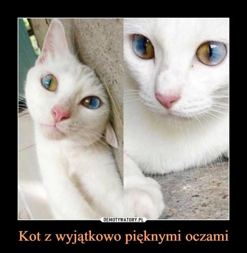 Kot z wyjątkowo pięknymi oczami