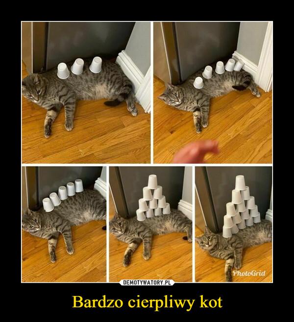 Bardzo cierpliwy kot –