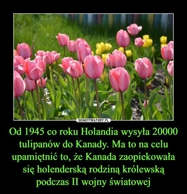 Od 1945 co roku Holandia wysyła 20000 tulipanów do Kanady. Ma to na celu upamiętnić to, że Kanada zaopiekowała się holenderską rodziną królewską podczas II wojny światowej –