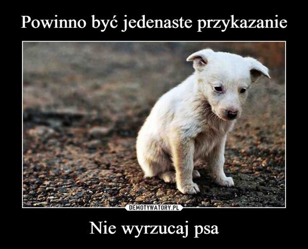 Nie wyrzucaj psa –