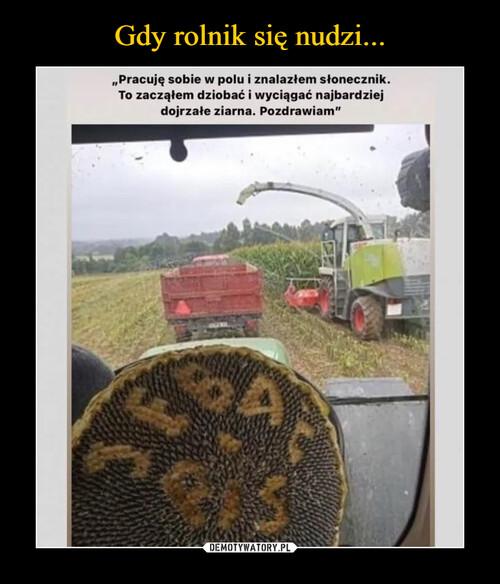 Gdy rolnik się nudzi...